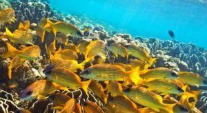 maldive[1].jpg
